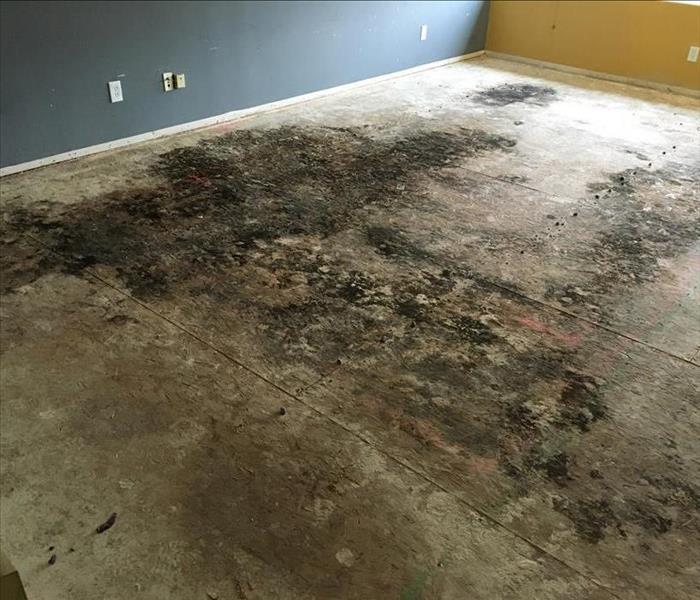 Remove Mold in Riverside, CA home