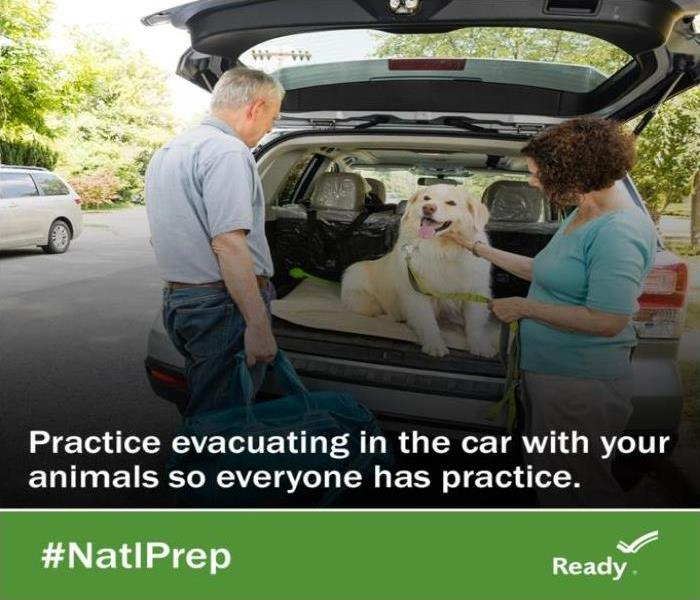Owners practicing an evacuation with a white medium size dog sitting in the back of an SUV with back hatch open
