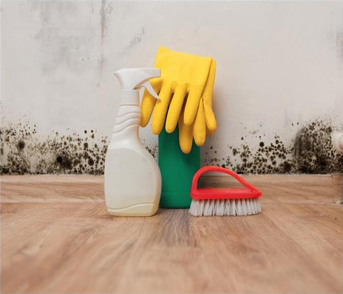 Mold Remediation Does Bleach Remove Mold from your Riverside home?