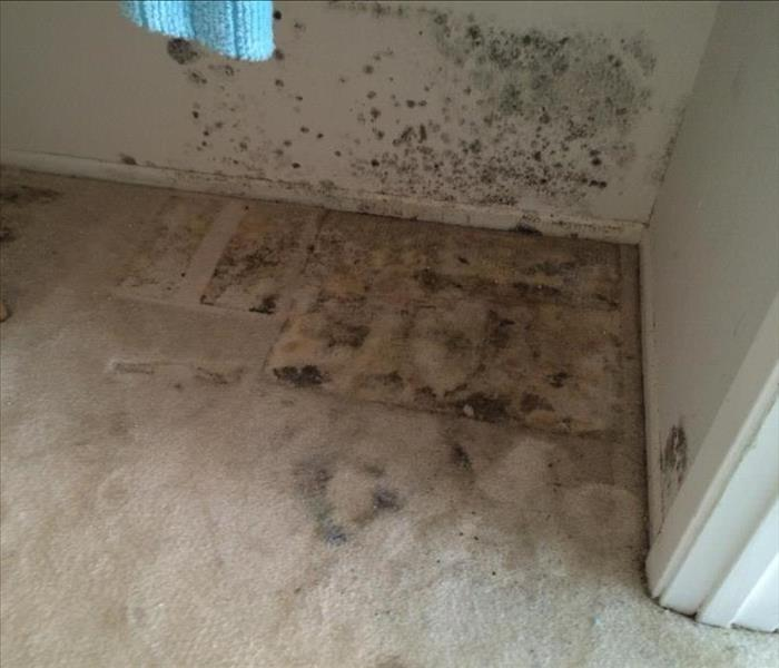 Mold Remediation Unsure if Mold Is Affecting Your Home? This Checklist can Help.