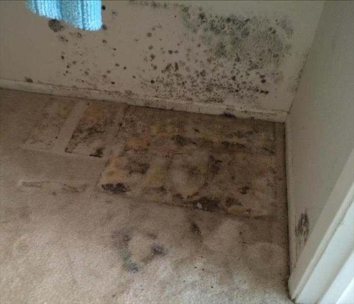 Mold Remediation Mold Growth Problems Riverside, CA and surrounding areas