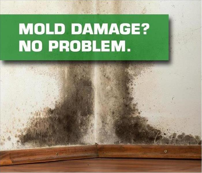 Mold Remediation SERVPRO Offers Mold Damage Remediation in Riverside, CA